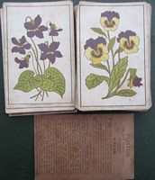 <B>c1885 - Flora Card Game printed by Marcus Ward & Co Ltd